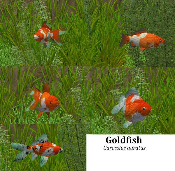 Topics tagged under goldfish on User - Made Creations Goldfish_zpsb723baf8