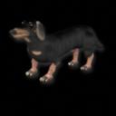 Los perros y gatos para Elite Daksundd