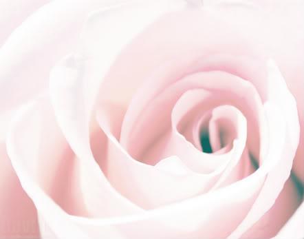 Ahora tengo 80 años y... Soft_petals_of_love_by_dev1n-1
