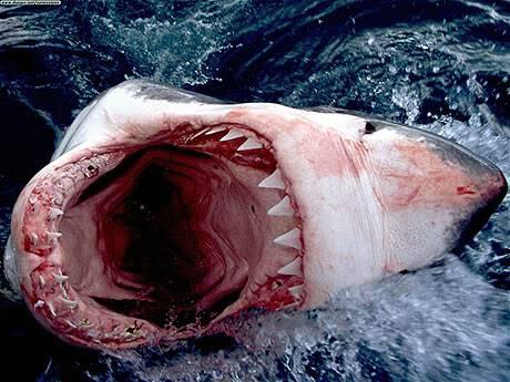 10 loài động vật nguy hiểm nhất hành tinh 5A08109163_1_11