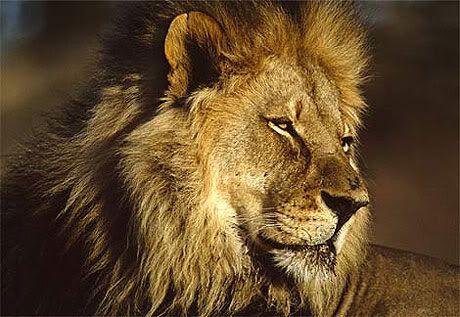10 loài động vật nguy hiểm nhất hành tinh 7V08109146_1_11