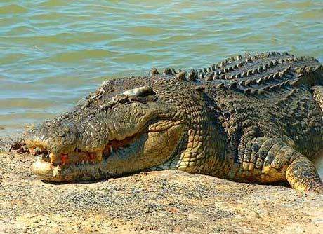 10 loài động vật nguy hiểm nhất hành tinh S508109155_1_11