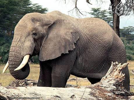 10 loài động vật nguy hiểm nhất hành tinh TL08109149_1_11