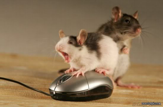 Post gambar2 kocak/unik disini ! Mouse