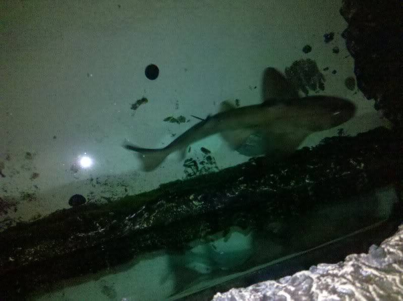 The stores horn shark...   6a9d15cb