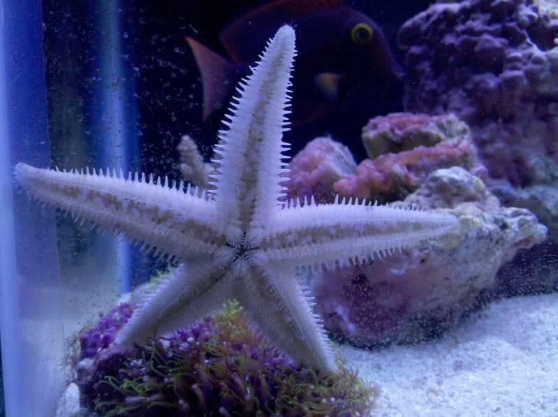 Starfish 96ae831a