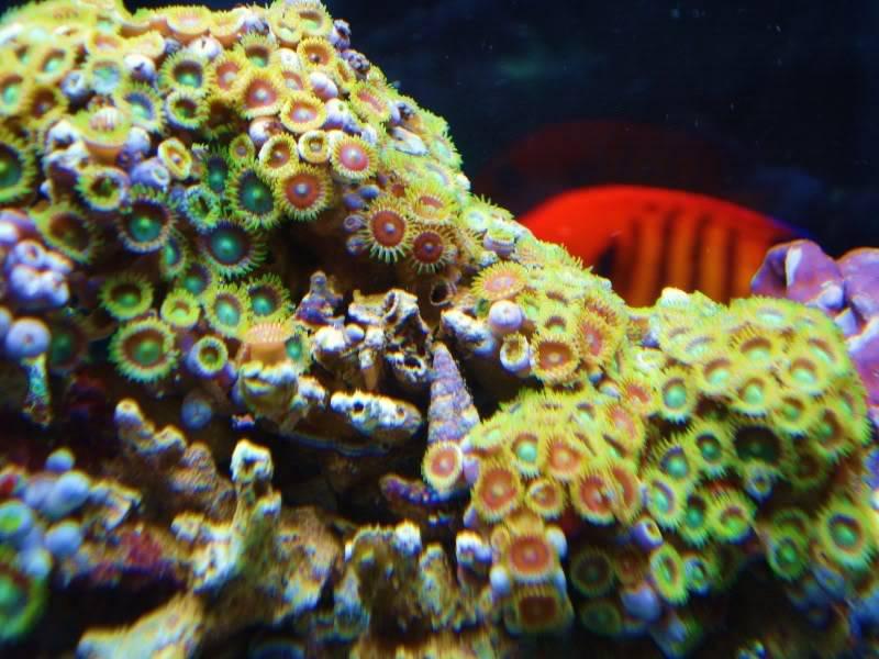 The Reef DSC02937-2