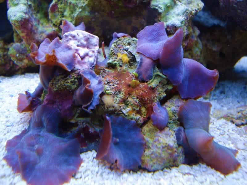 The Reef DSC02938-2