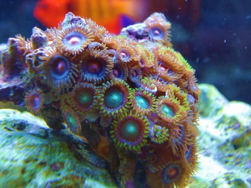 The Reef DSC02963-2