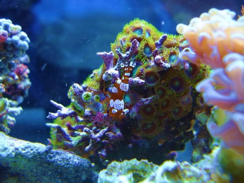 The Reef DSC03031-2