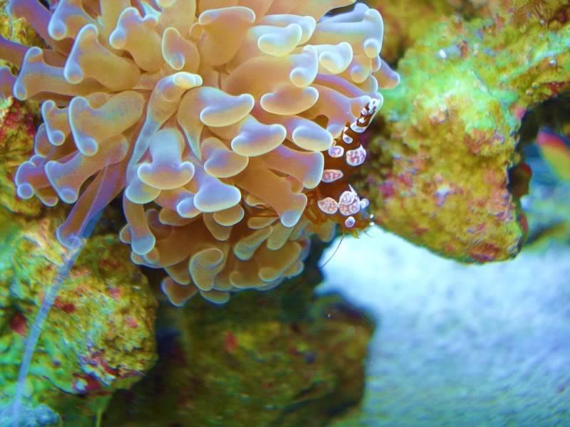 The Reef DSC03035-2