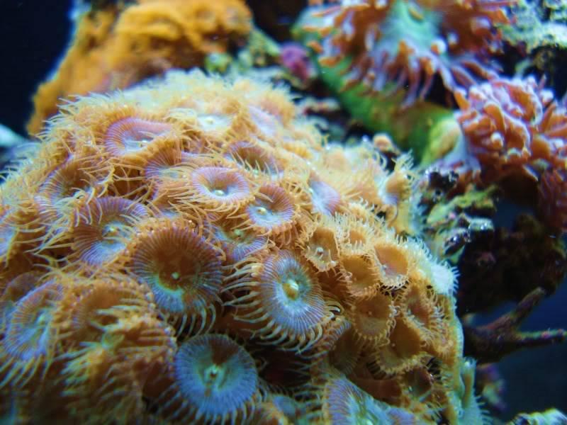 The Reef DSC03128-1
