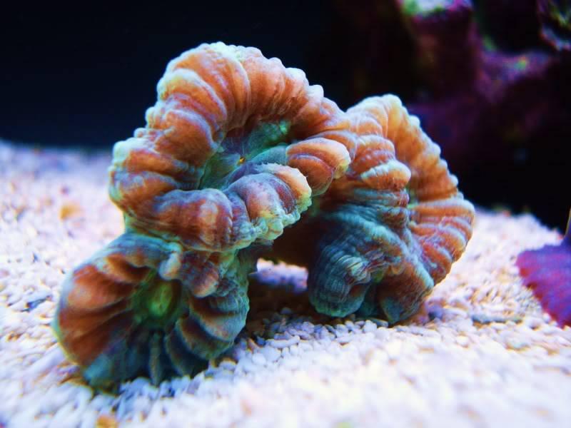 The Reef DSC03131-1
