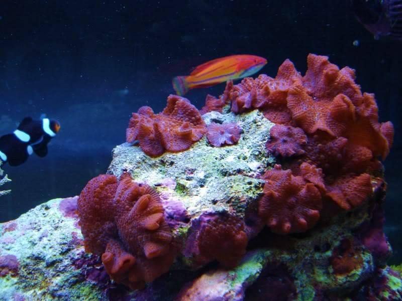The Reef DSC03137