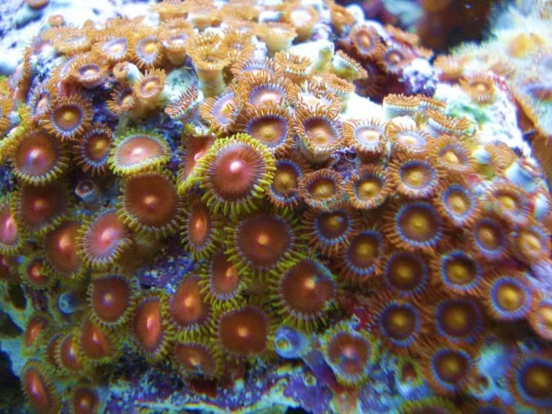 The Reef DSC03140
