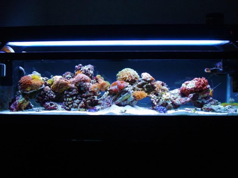 The Reef DSC03325