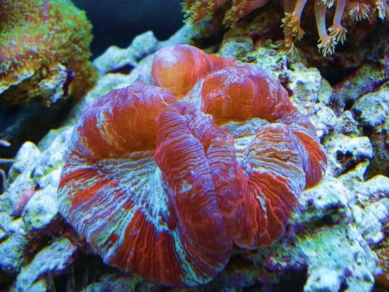 The Reef DSC03326