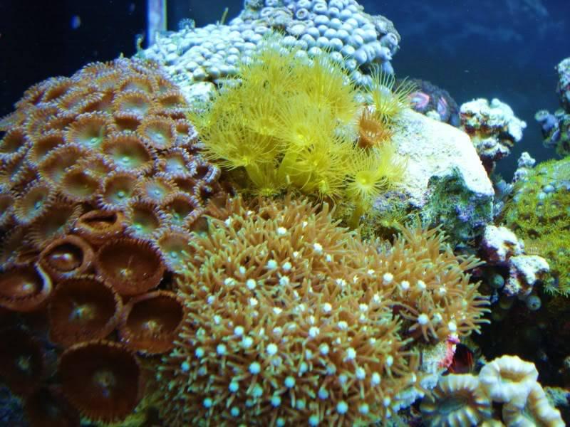 The Reef DSC03327
