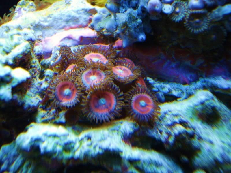 The Reef DSC03328
