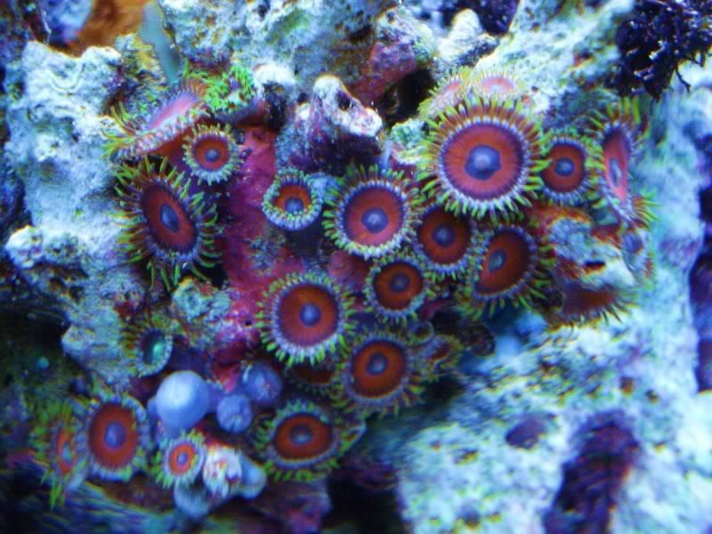 The Reef DSC03329