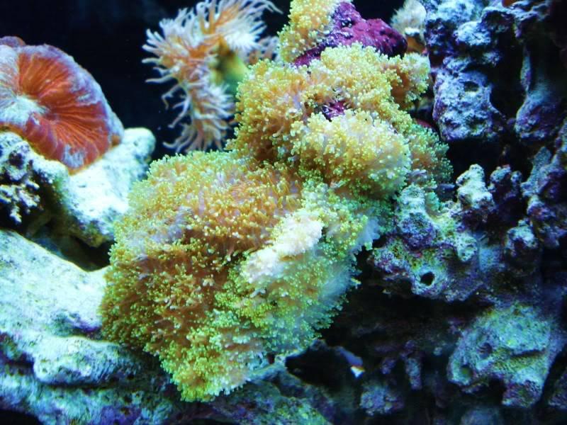 The Reef DSC03330