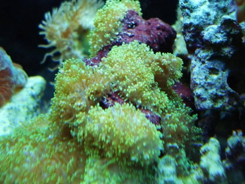 The Reef DSC03331