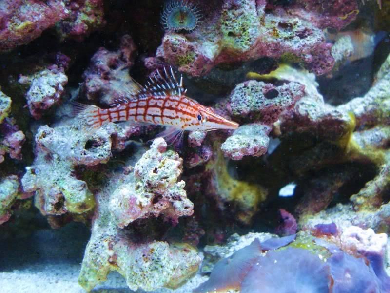 Random Reef Shots DSC03442