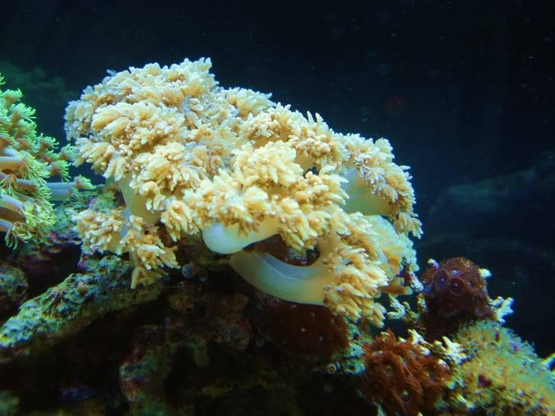 Random Reef Shots DSC03444