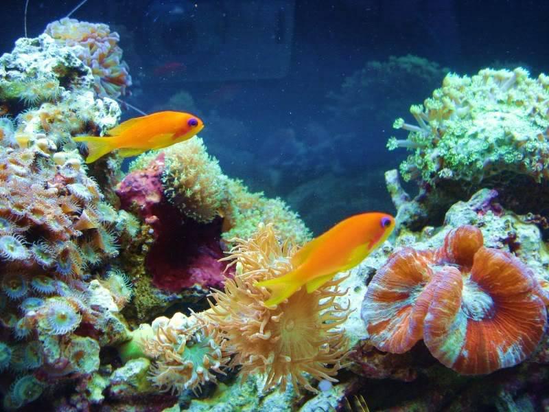 Random Reef Shots DSC03446
