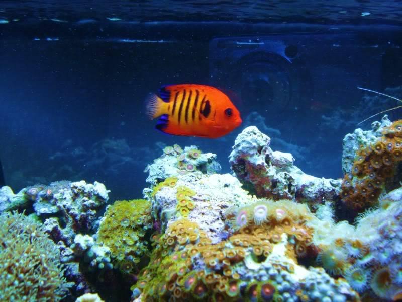 Random Reef Shots DSC03447