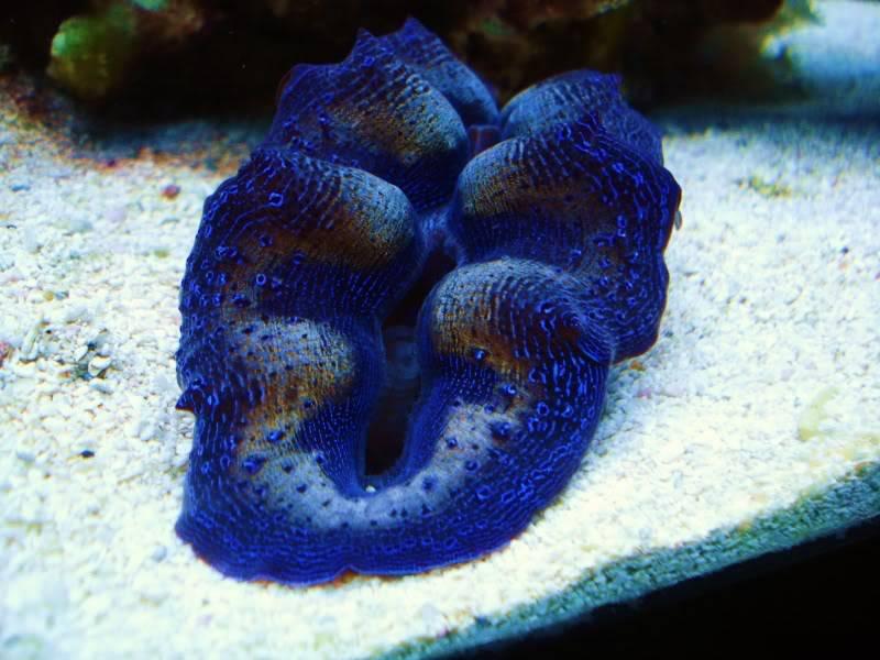 Random Reef Shots DSC03451