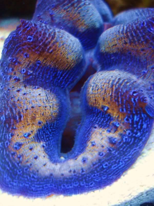 Random Reef Shots DSC03452