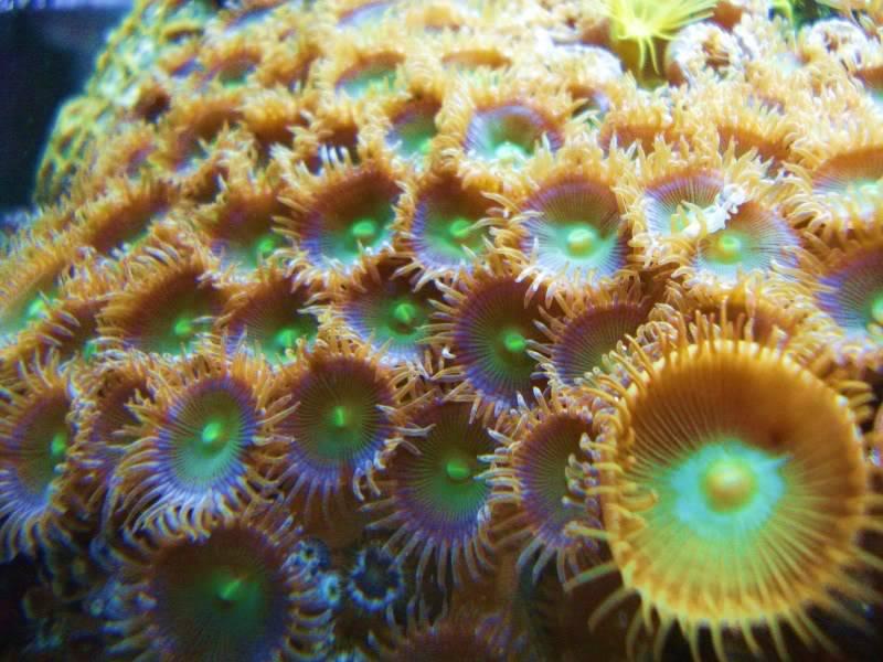 Random Reef Shots DSC03455