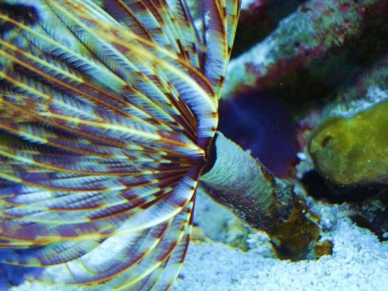 Random Reef Shots DSC03458