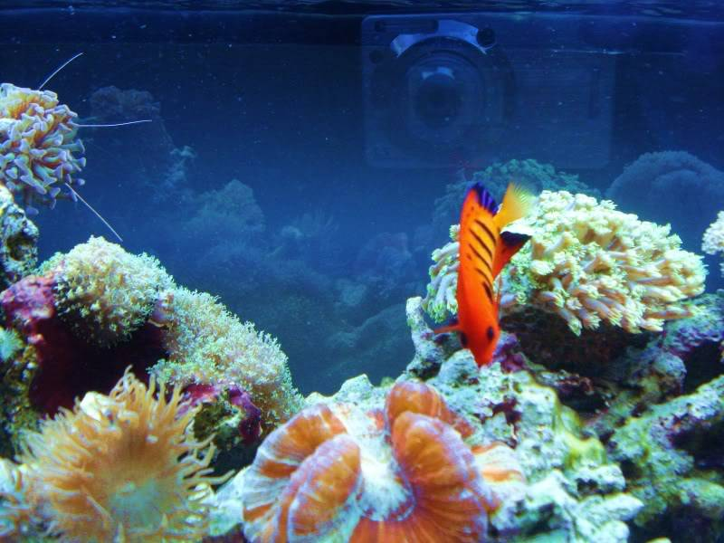 Random Reef Shots DSC03463