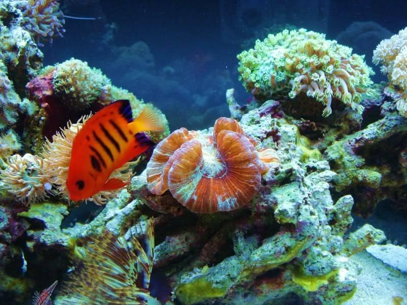 Random Reef Shots DSC03464