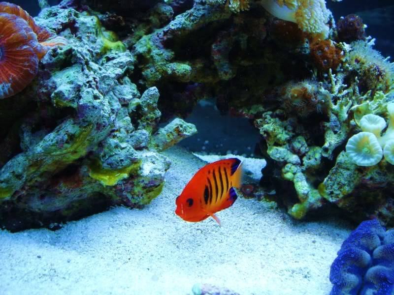 Random Reef Shots DSC03465