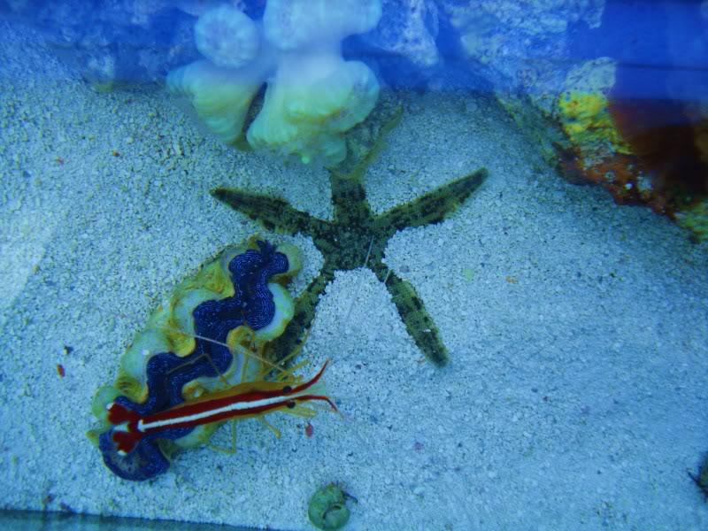 sand sifting starfish DSC03498