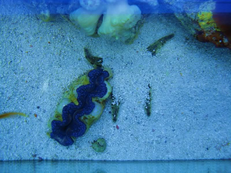 sand sifting starfish DSC03500
