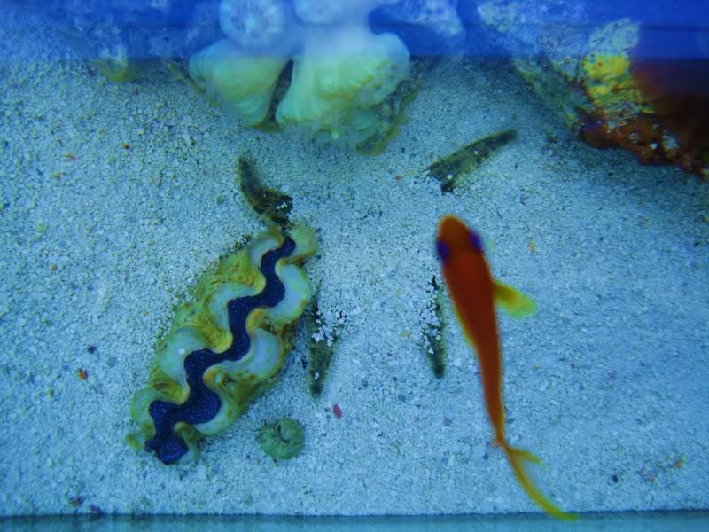 sand sifting starfish DSC03501