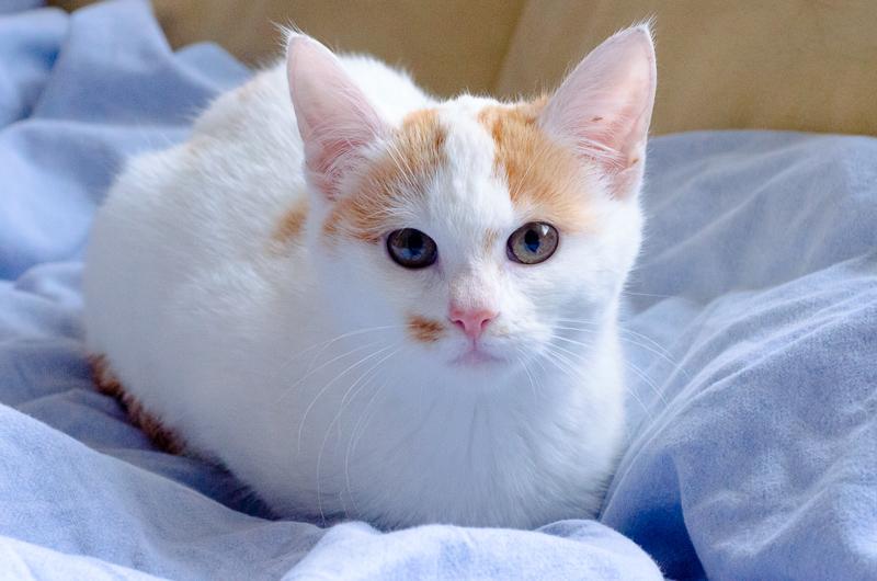 Lyly (ancienne Jakadi), femelle née le 1/09/2014 blanche tachetée de roux JakadiS1-17_zpsa5b87ea9