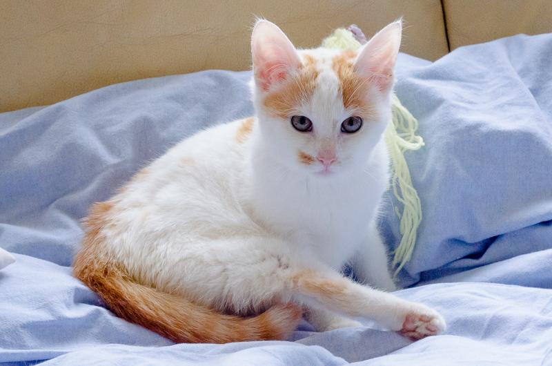 Lyly (ancienne Jakadi), femelle née le 1/09/2014 blanche tachetée de roux JakadiS1-26_zps4c5e87a9