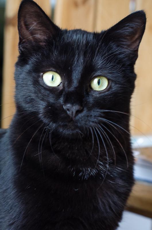 Jango, mâle type européen noir né 28/05/2014 Jango-3_zps7d3807f5