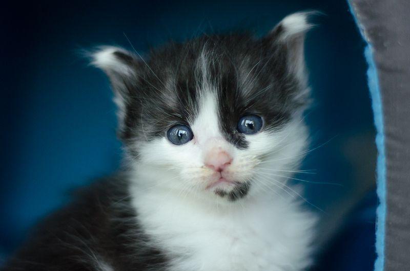 Joy, femelle noire et blanche, née le 1er avril 2014 JoyJ1-9_zpsf878ea06
