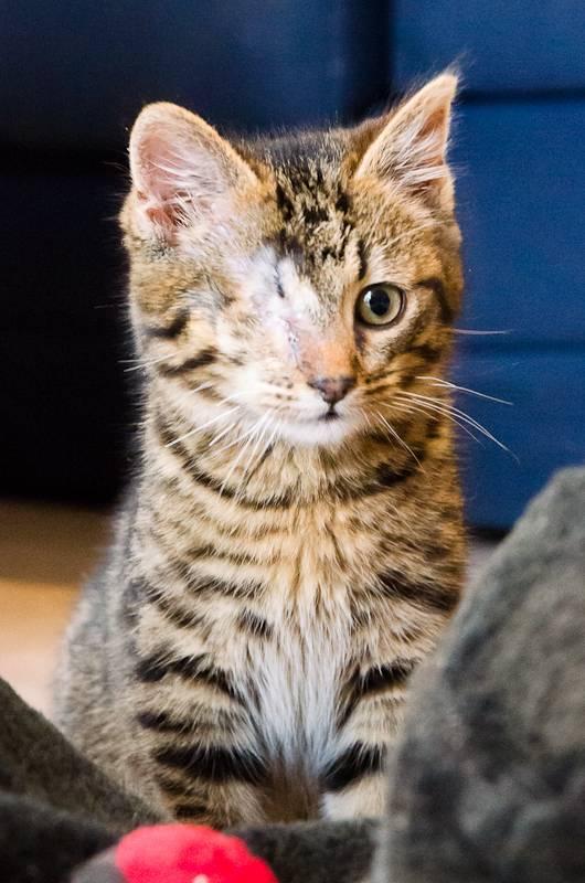 Albator, mâle type européen tigré né 15/10/2014 AlbatorS1-22_zps094a50c4