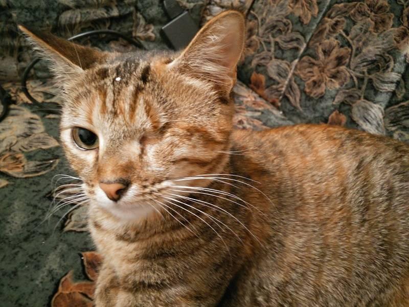Kenjy femelle type européenne tabby calicot née le 15/10/2014 - Page 4 IMG_20150928_203746_zpsxxyn9mtt
