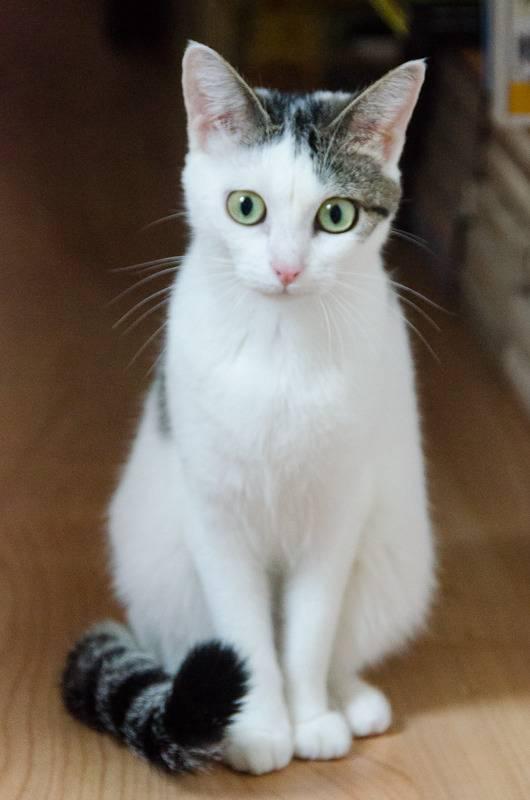 Jorelle, femelle type européen blanche tachetée de noir née le 1 novembre 2014 - Page 6 Jorelle%20S1-3_zpssn7vhej9