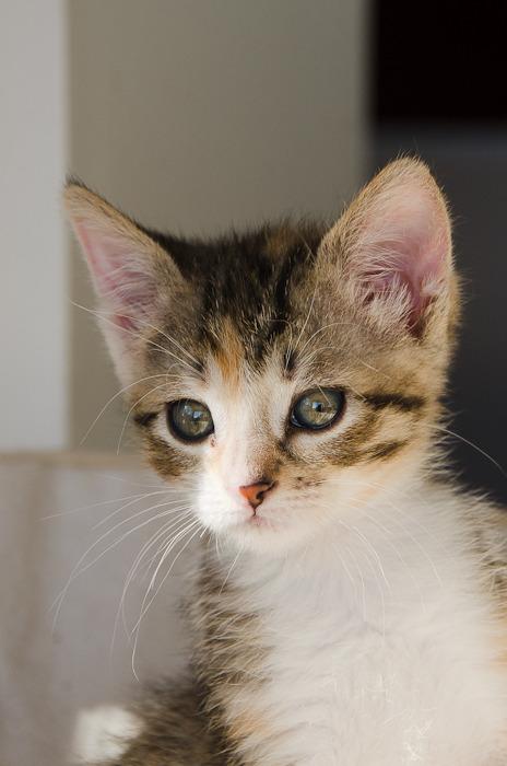 Princesse Leïa, femelle type européenne tigrée calicot née 20/02/2015 - Page 2 Leia%20-%20J21-15_zpsbcegnmn5