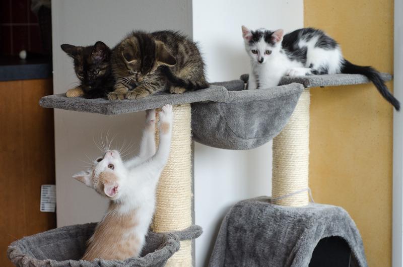Pistache (ancien Lonny) chaton Blanc et Roux clair né début mai 2015 Lonny%20S2-11_zpsh0avxpmi