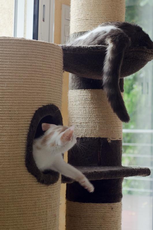 Pistache (ancien Lonny) chaton Blanc et Roux clair né début mai 2015 Lonny%20S2-12_zpsfbvoc0hf
